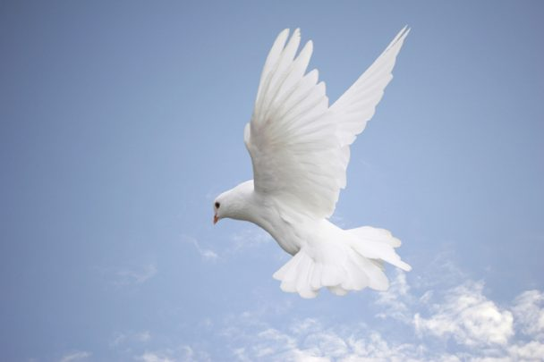 Live In Grace and Peace