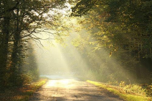 Jesus the Light to my Path