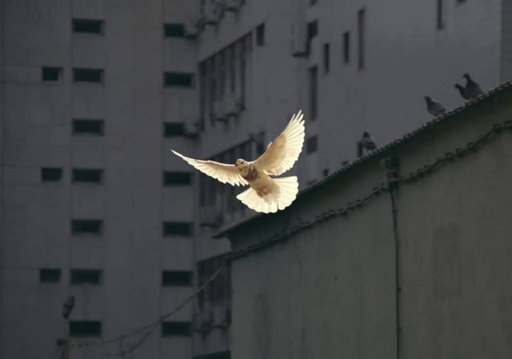 Jesus the Peacemaker